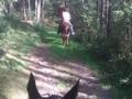 2011-09-impressionen-von-doris-auf-der-nth-ranch_07