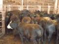 2012-04-21-oklahoma_09