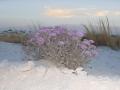 2012-04-23-new-mexico-arizona_86