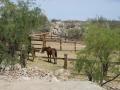 2012-04-25-arizona_05