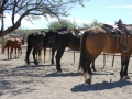 2012-04-26-arizona_05