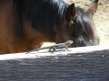 2012-04-27-arizona_02
