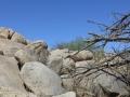 2012-04-27-arizona_03
