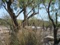 2012-04-27-arizona_07