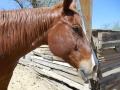 2012-04-27-arizona_19