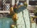 2012-04-28-arizona_09
