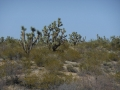 2012-04-29-arizona-nevada_08