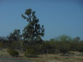 2012-04-29-arizona-nevada_09