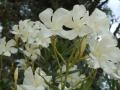 2012-05-17-florida_01