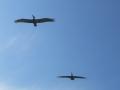 2012-05-17-florida_13