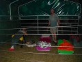 2012-07-26-one-night-with-our-horses_01