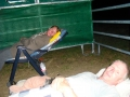 2012-07-26-one-night-with-our-horses_03