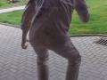 2012-08-10-amys-urlaub-und-pettersons-restauration_03