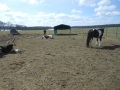 2013-04-07-sunday-trail_17