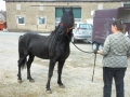 2013-05-09-breeding-season-at-nth-ranch_04