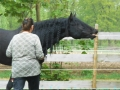 2013-05-09-breeding-season-at-nth-ranch_11
