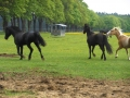 2013-05-09-breeding-season-at-nth-ranch_12