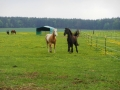 2013-05-09-breeding-season-at-nth-ranch_14
