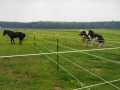 2013-05-09-breeding-season-at-nth-ranch_15