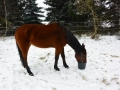 2014-01-26-feeding-our-horses-jimmy_01