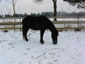 2014-01-26-feeding-our-horses-ladonnas-lady-may