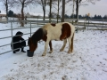 2014-01-26-feeding-our-horses-pueppi