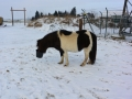 2014-01-26-feeding-our-horses-schneewittchen