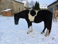 2014-01-26-feeding-our-horses-tigger-in-mission