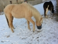 2014-01-26-feeding-our-horses_dooleys-cappugino_02