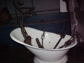 2011-10-26-horse-in-a-tub_03