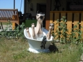2011-10-26-horse-in-a-tub_04