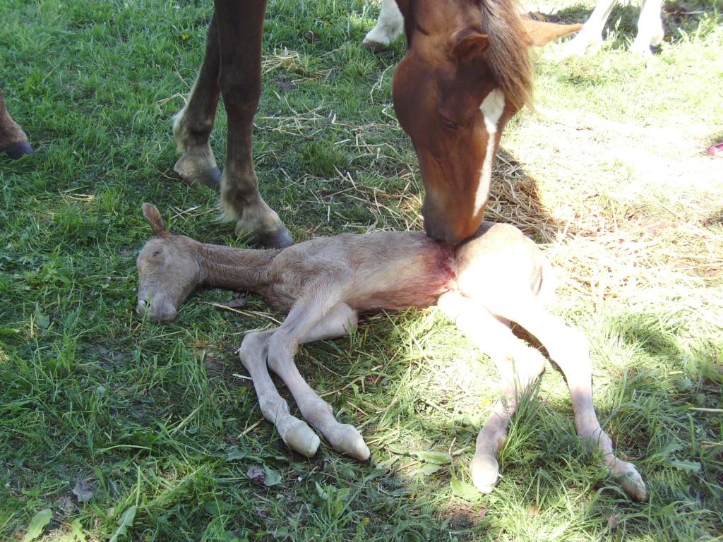 2011-05-09-doolys-cappugino_004