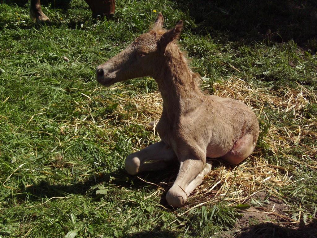 2011-05-09-doolys-cappugino_010