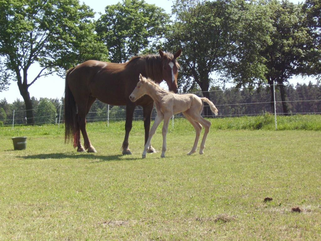 2011-05-09-doolys-cappugino_014