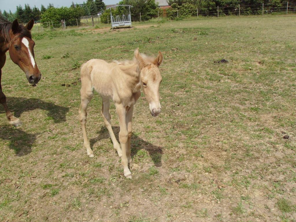 2011-05-26-doolys-cappugino_038