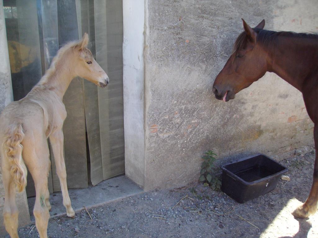 2011-06-04-doolys-cappugino_046