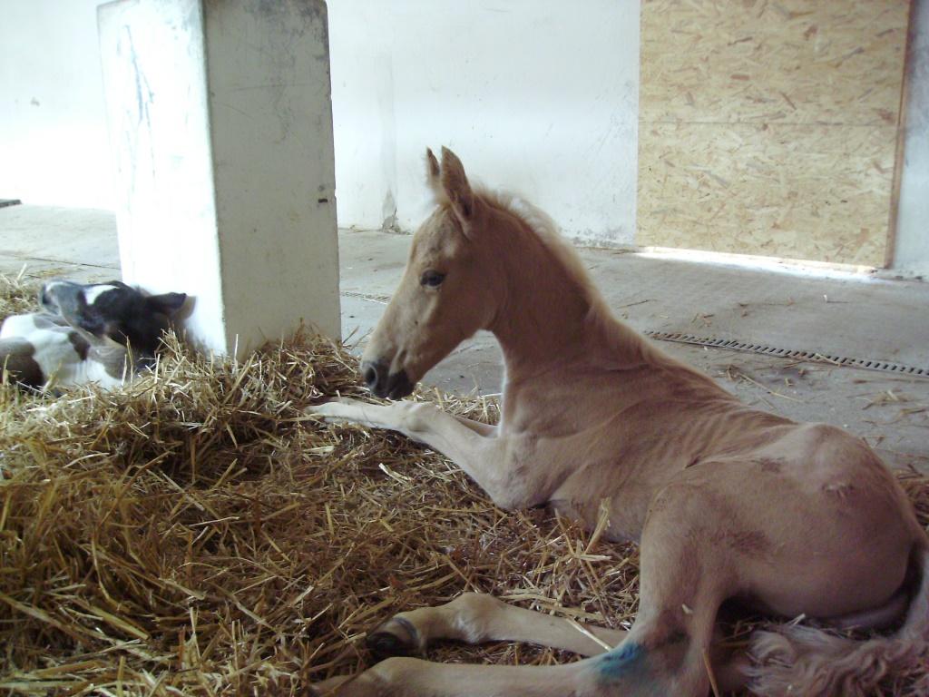 2011-06-13-doolys-cappugino_052