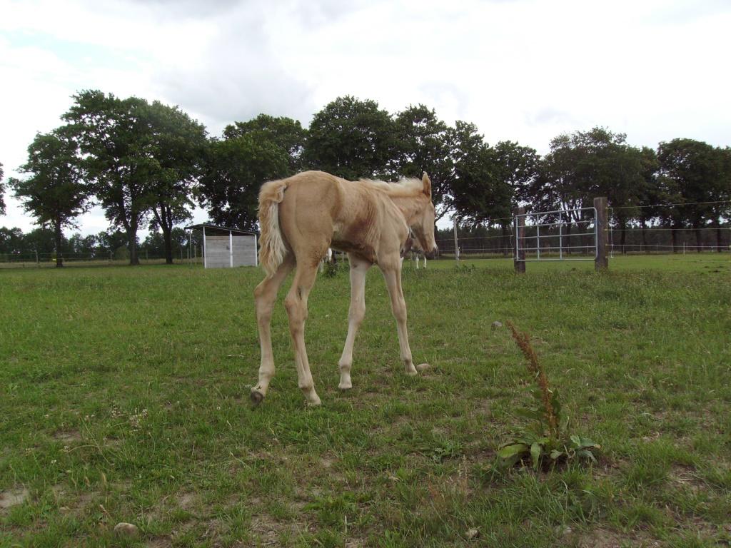 2011-06-18-doolys-cappugino_055