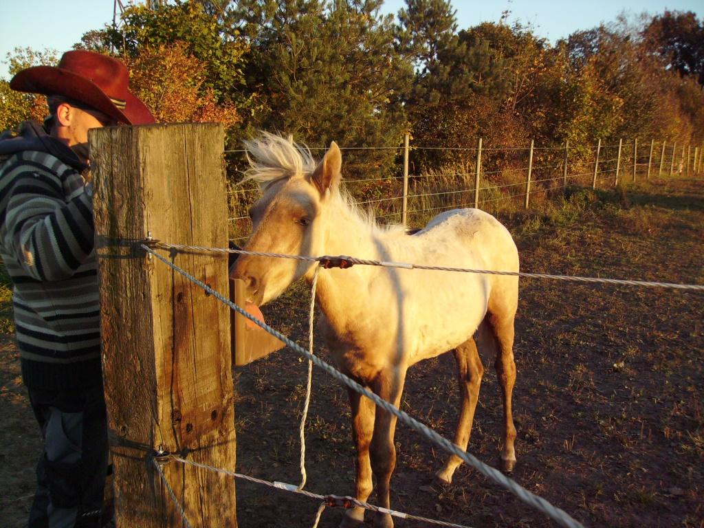 2011-10-16-doolys-cappugino_070
