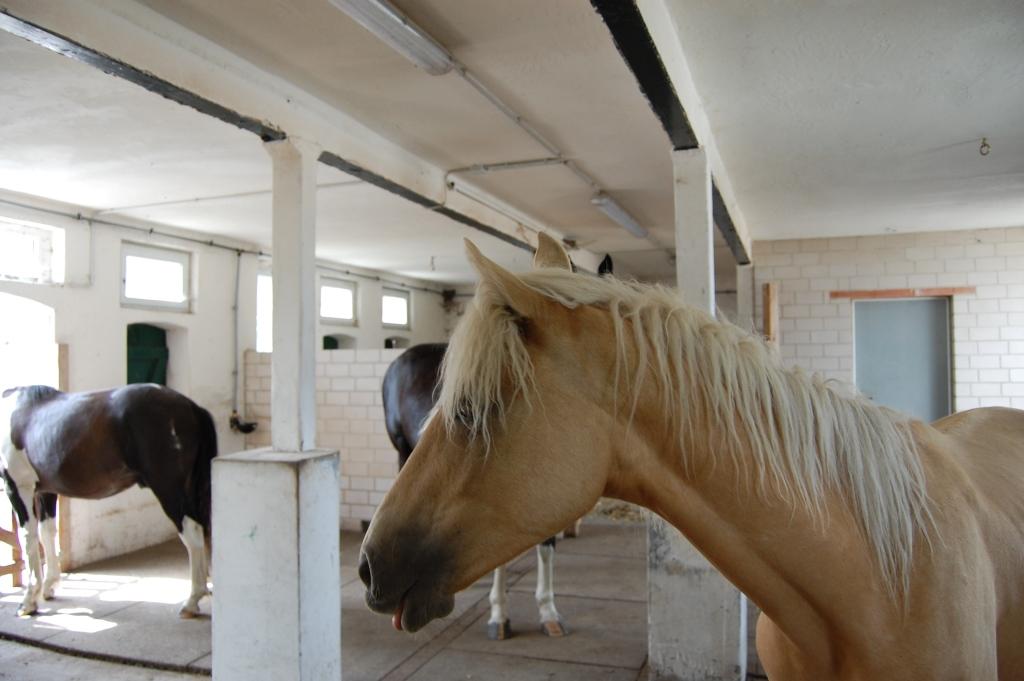 2012-06-29-doolys-cappugino_090