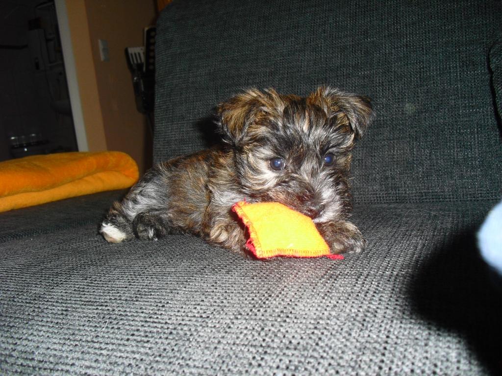 2011-10-31-frodo_09