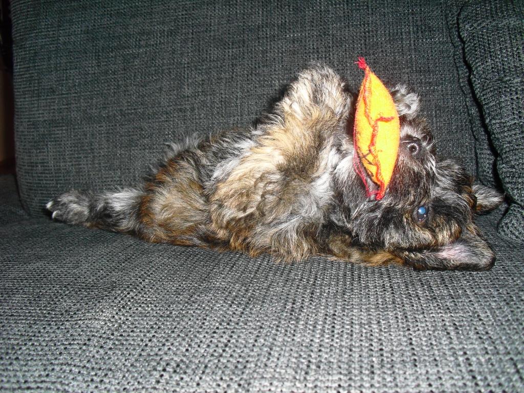 2011-10-31-frodo_11