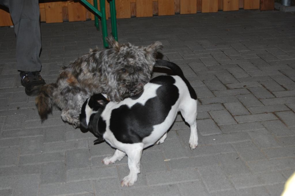 2012-06-29-frodo_34