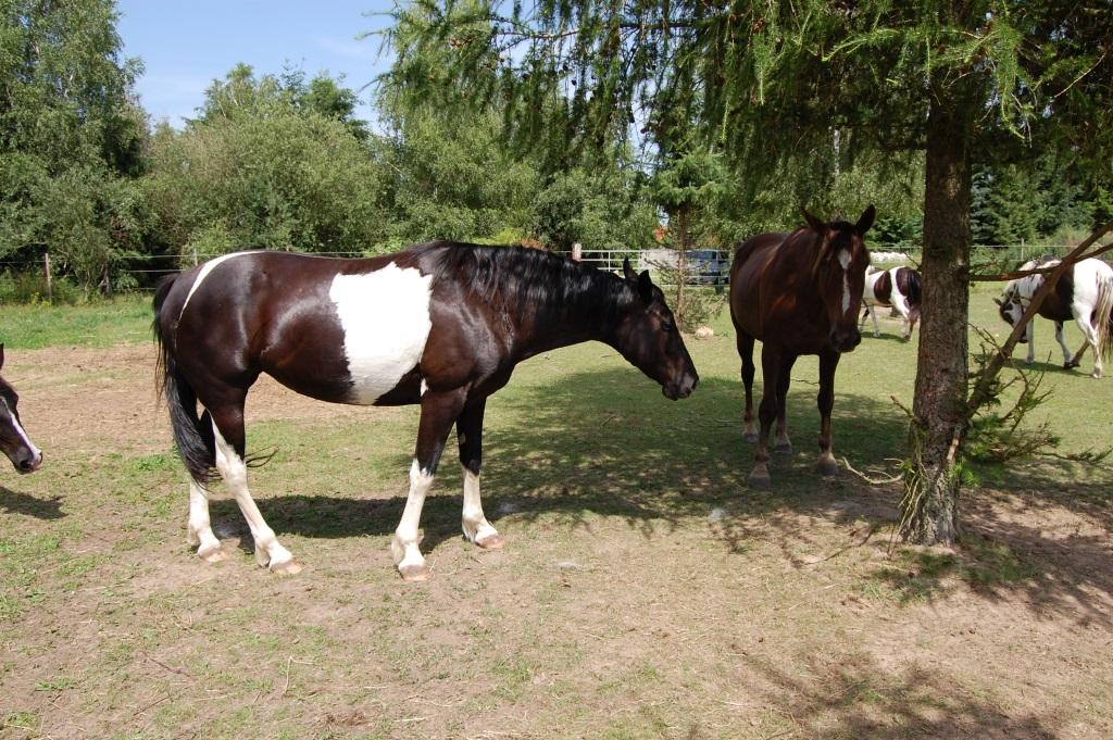 2012-06-29-tiggers-lady-sancoussi_06